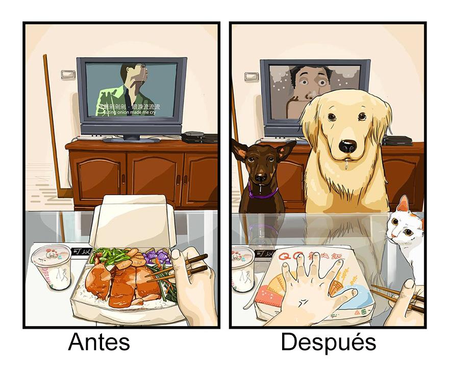 vida-antes-despues-perro-maimai-john (8)