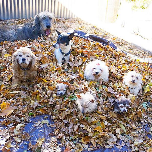 familia-perros-ancianos-adoptados-steve-greig (10)