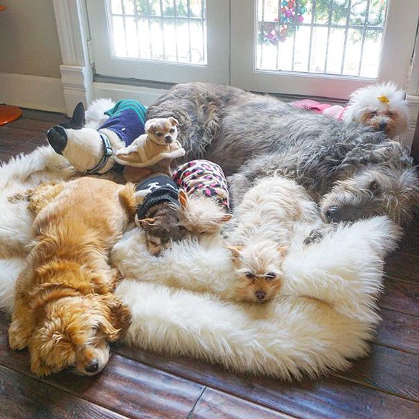 familia-perros-ancianos-adoptados-steve-greig (11)