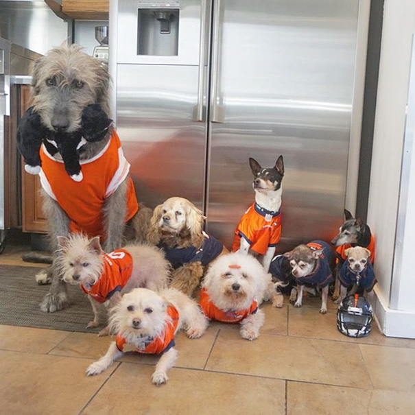 familia-perros-ancianos-adoptados-steve-greig (13)