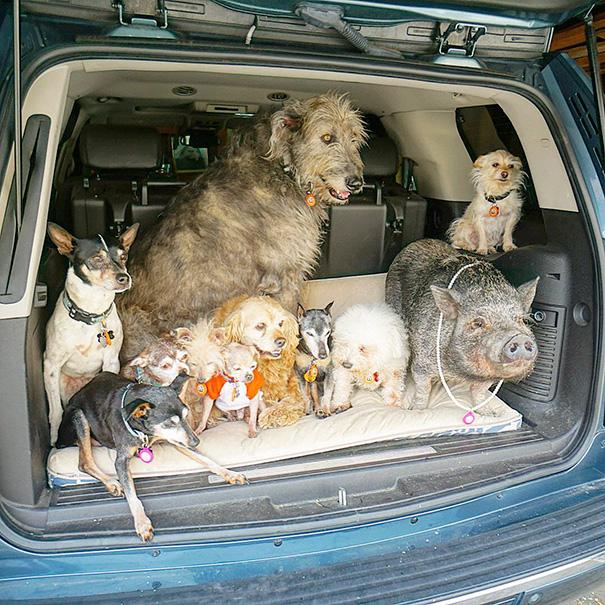 familia-perros-ancianos-adoptados-steve-greig (15)