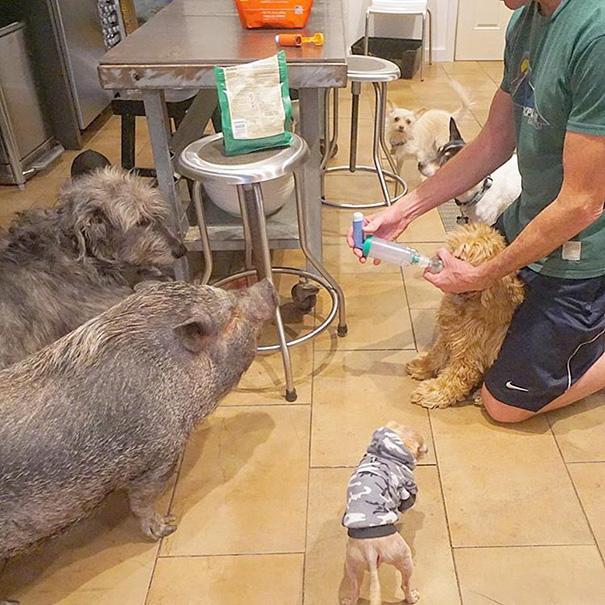 familia-perros-ancianos-adoptados-steve-greig (16)