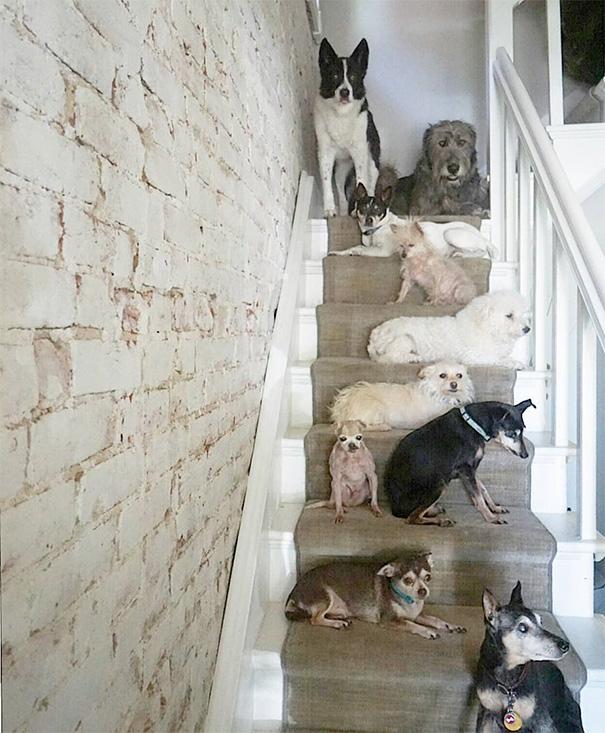 familia-perros-ancianos-adoptados-steve-greig (17)