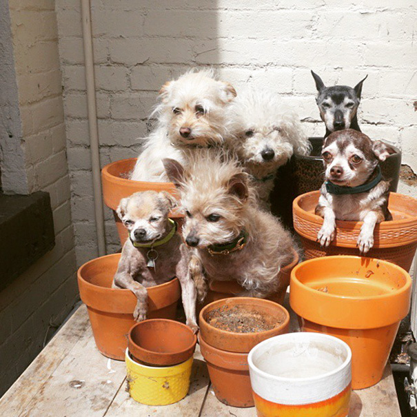 familia-perros-ancianos-adoptados-steve-greig (2)