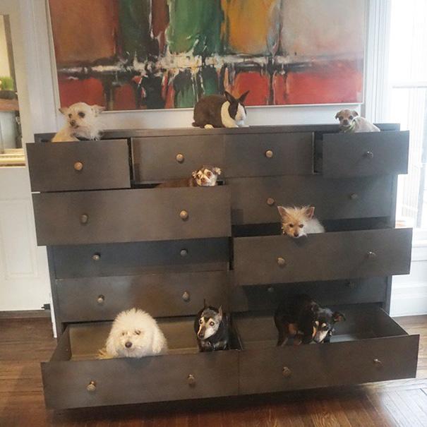 familia-perros-ancianos-adoptados-steve-greig (3)