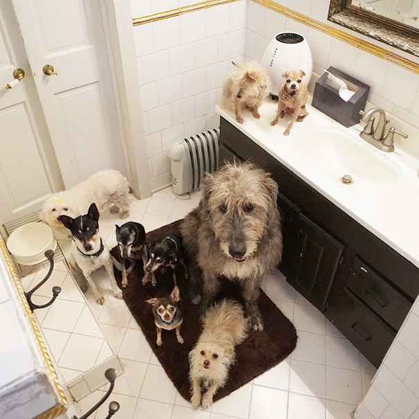 familia-perros-ancianos-adoptados-steve-greig (5)