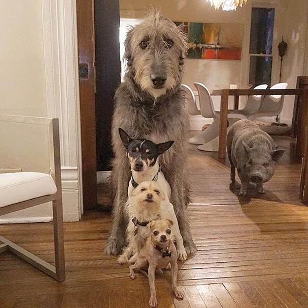 familia-perros-ancianos-adoptados-steve-greig (7)