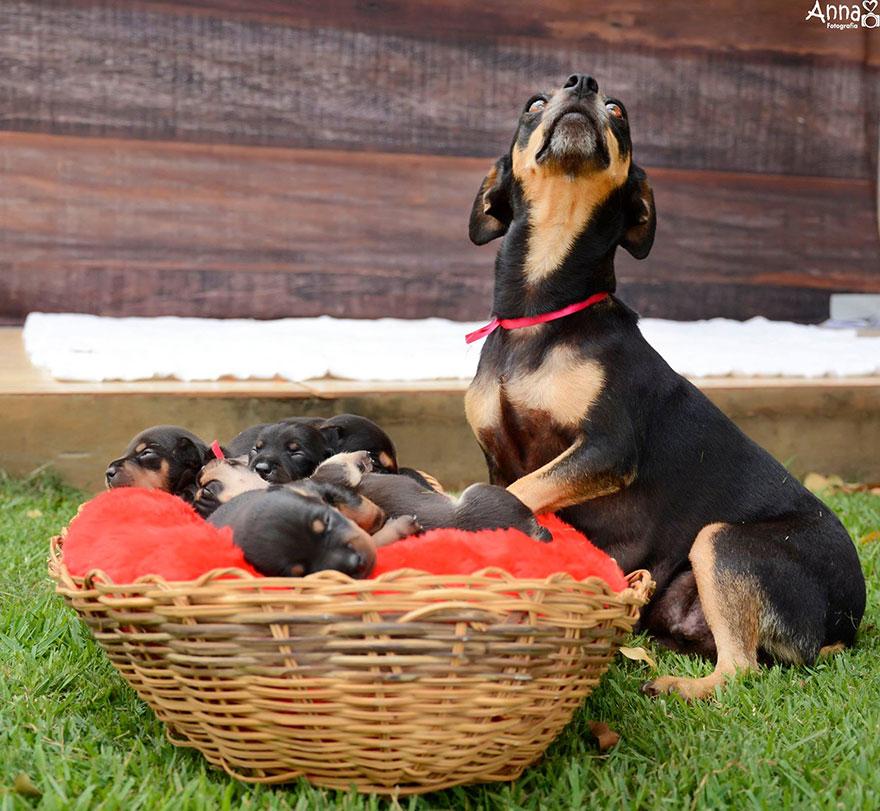 fotos-cachorros-perro-lilica-ana-paula-grillo (6)