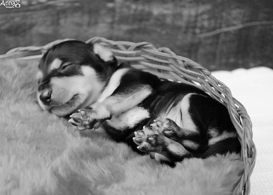 fotos-cachorros-perro-lilica-ana-paula-grillo (7)