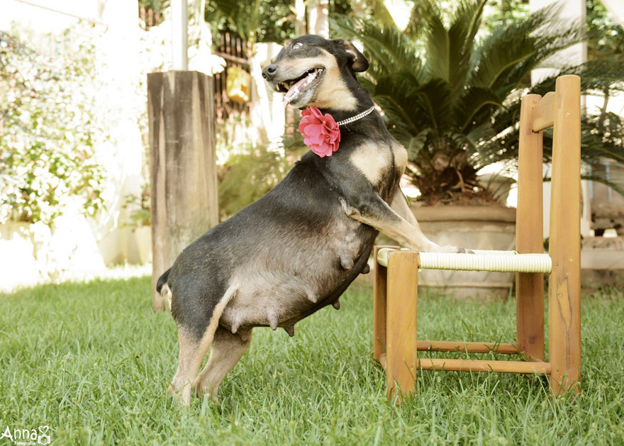 fotos-embarazo-perro-lilica-ana-paula-grillo (3)