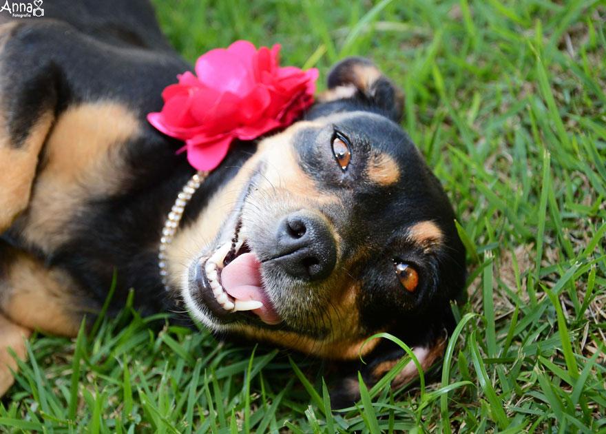 fotos-embarazo-perro-lilica-ana-paula-grillo (5)