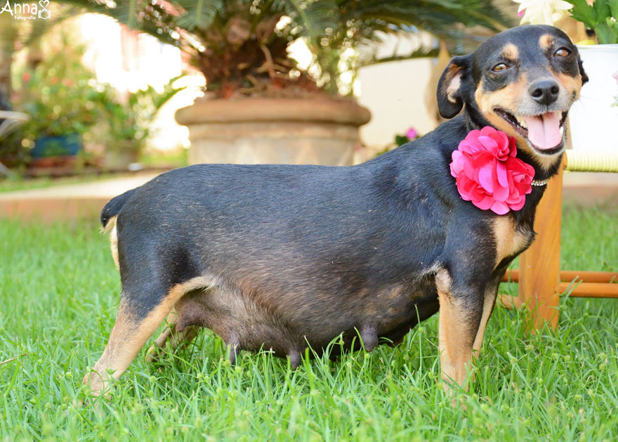 fotos-embarazo-perro-lilica-ana-paula-grillo (6)