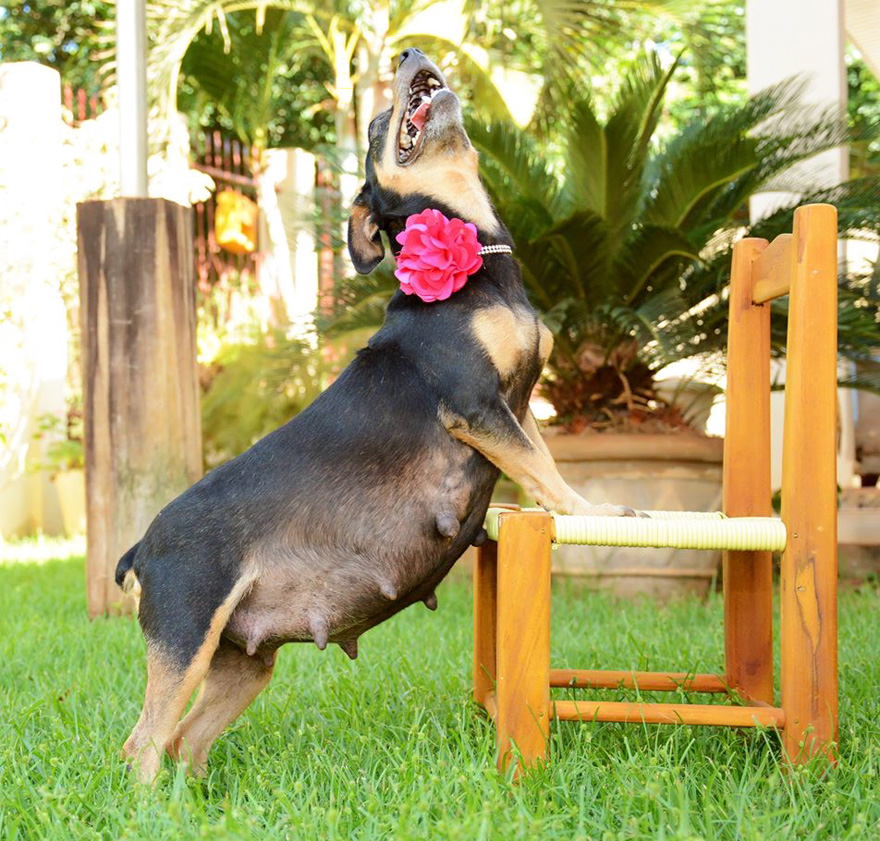 fotos-embarazo-perro-lilica-ana-paula-grillo (8)