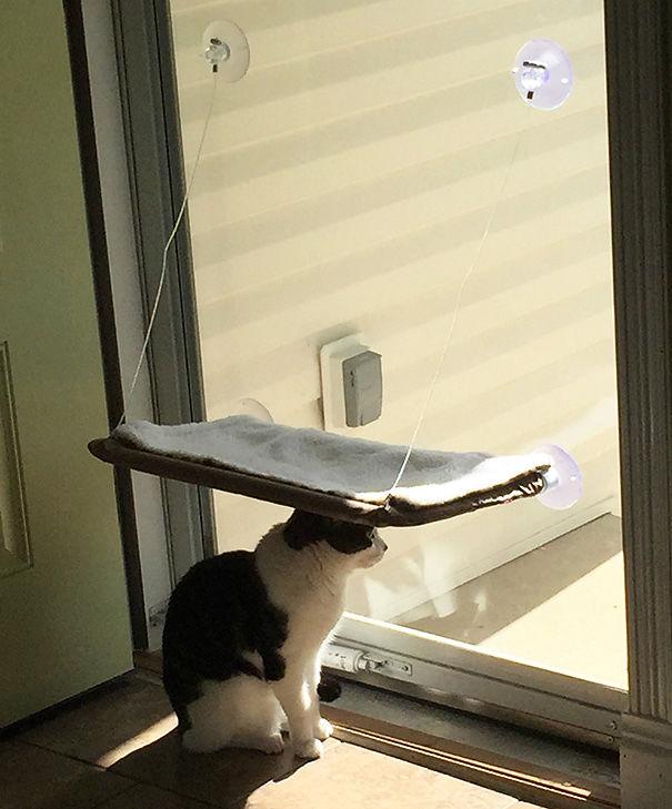 logica-gatos-divertida-3 (16)