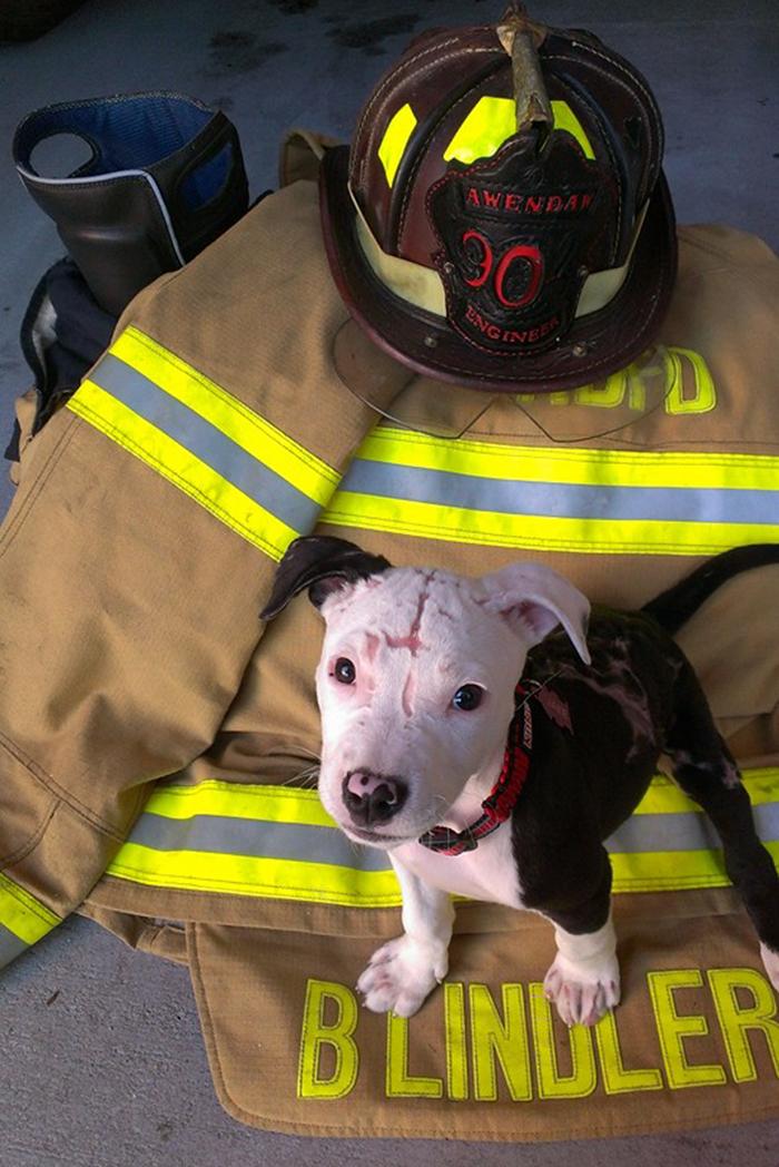 Perro rescatado de un incendio se convierte en bombero