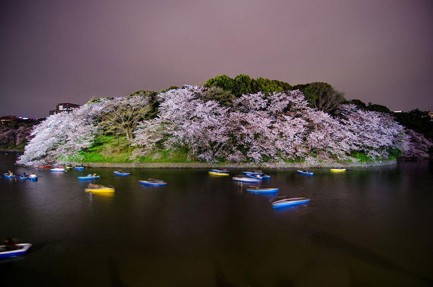 primavera-flores-cerezo-sakura-japon-national-geographic (10)