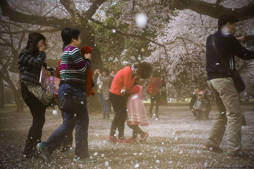 primavera-flores-cerezo-sakura-japon-national-geographic (8)