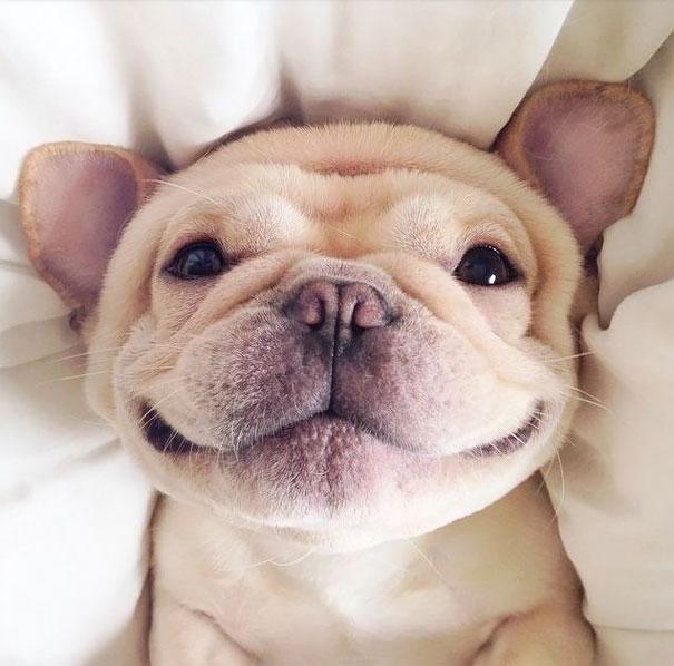 25 animales sonriendo que instantáneamente van a contagiarte su espectacular sonrisa