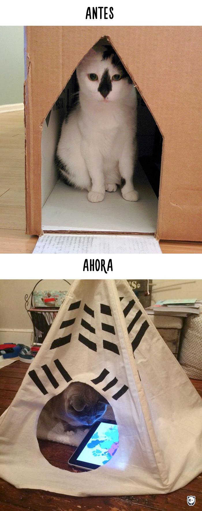 Antes y ahora: Cómo la tecnología ha cambiado la vida de los gatos
