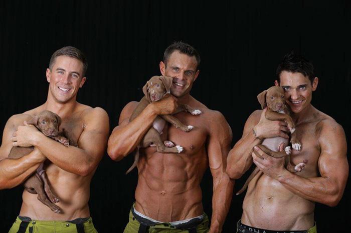 calendario-benefico-bomberos-cachorros-australia (1)