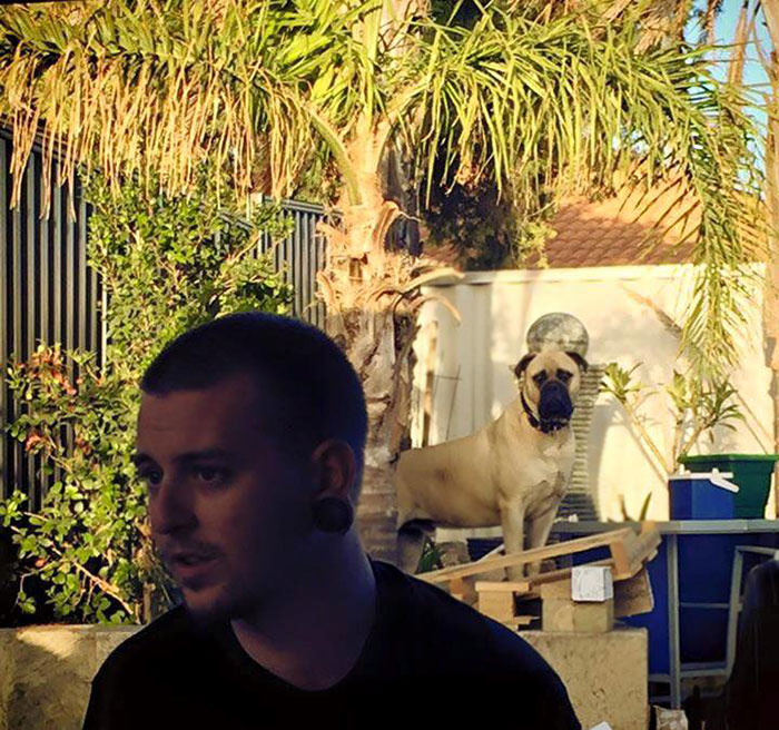cyrus-perro-inquietante-bullmastiff-lauren-birney (15)