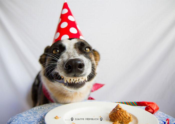 fiestas-cumpleanos-animales (15)
