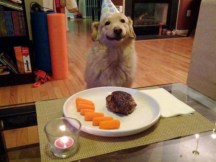 fiestas-cumpleanos-animales (19)