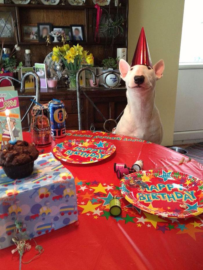 fiestas-cumpleanos-animales (20)