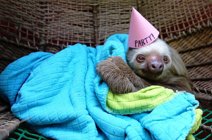 fiestas-cumpleanos-animales (21)