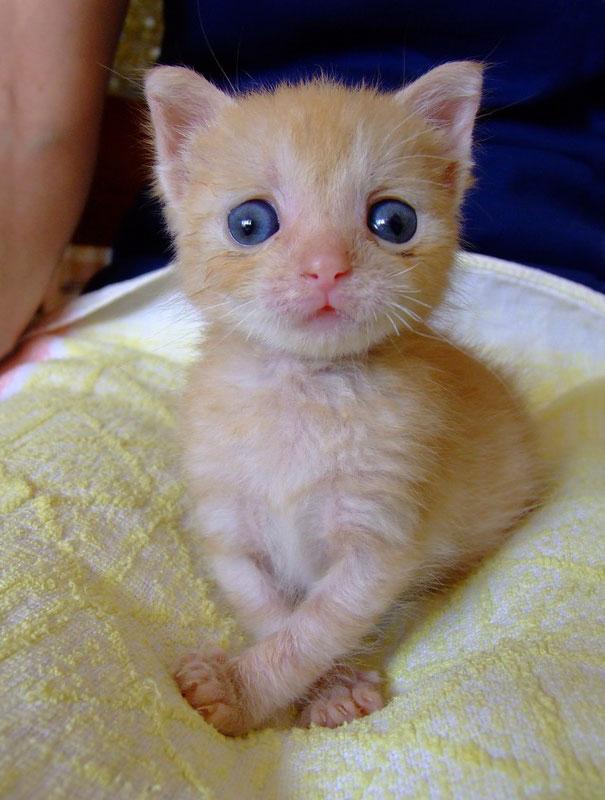 15 Gatitos bizcos que demuestran que no hay que ser perfecto para ser amado