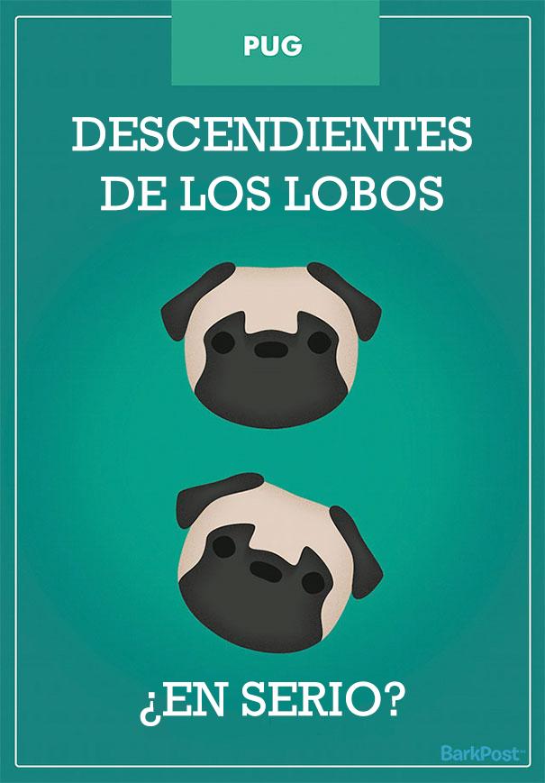 ilustraciones-eslogan-razas-perros-1