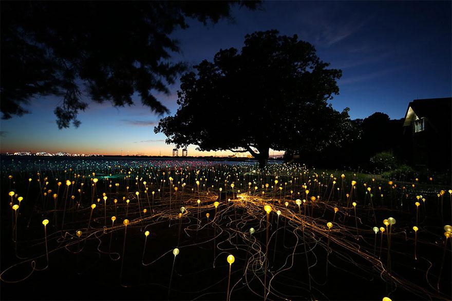 instalacion-luminica-campo-luz-bruce-munro-uluru (1)