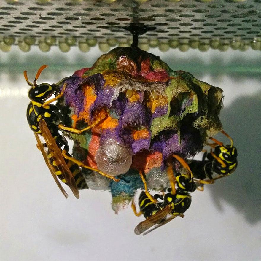 nidos-avispa-cartonera-colores-mattia-menchetti (3)