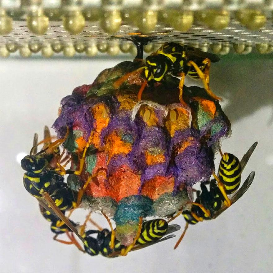nidos-avispa-cartonera-colores-mattia-menchetti (4)