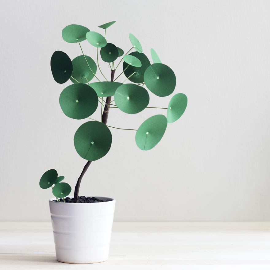 No pod a cultivar plantas de verdad as que hice estas de - Planta china del dinero ...