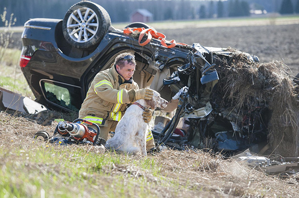 bomberos-salvando-animales (14)