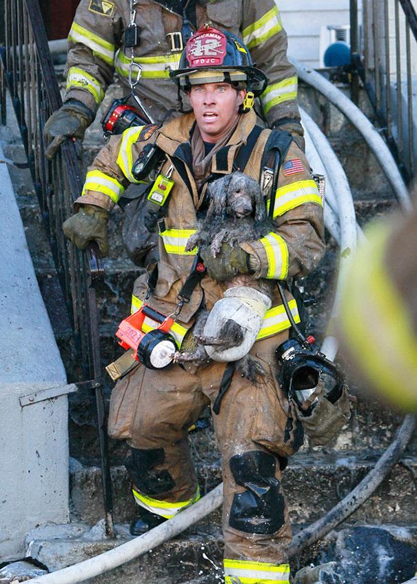 bomberos-salvando-animales (2)