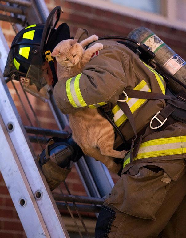 bomberos-salvando-animales (5)