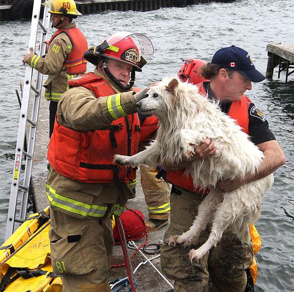 bomberos-salvando-animales (8)