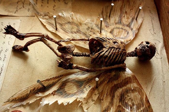 Descubren extraños esqueletos en el sótano de una casa vieja en Londres