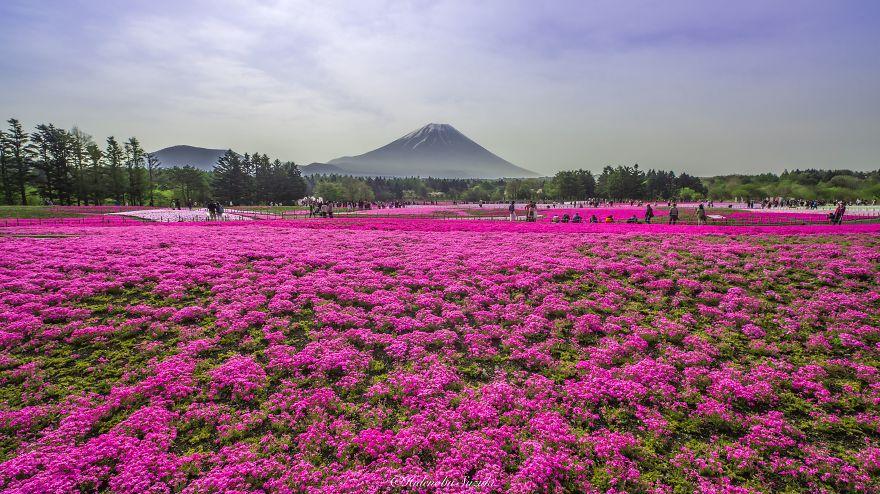 fotografia-flores-nemophila-japon-hidenobu-suzuki (6)
