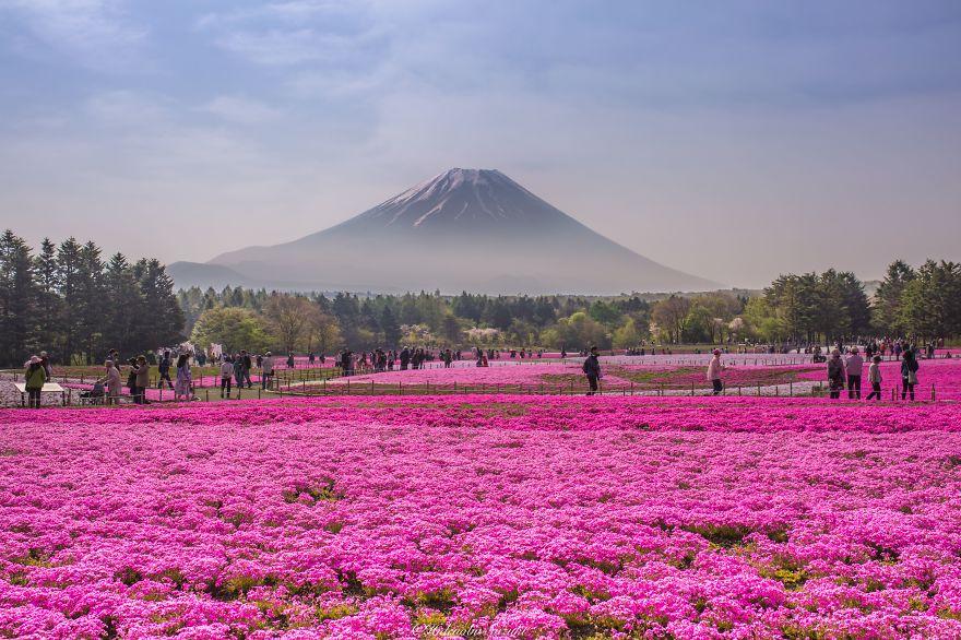 fotografia-flores-nemophila-japon-hidenobu-suzuki (8)