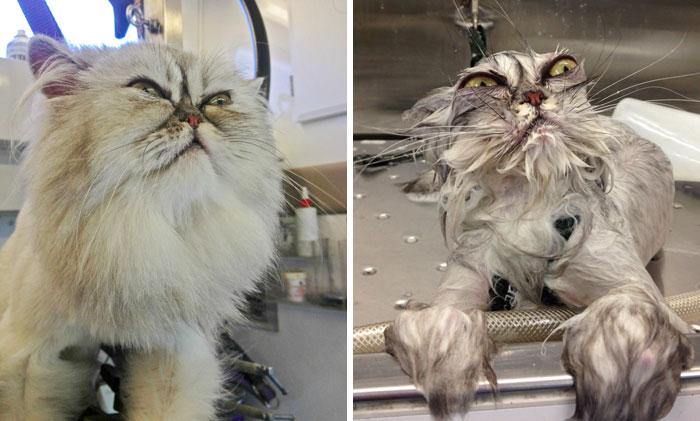 12 mascotas antes y después del baño