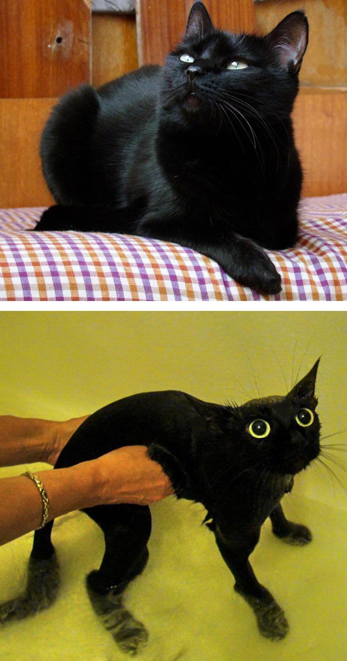 fotos-mascotas-antes-despues-bano (2)