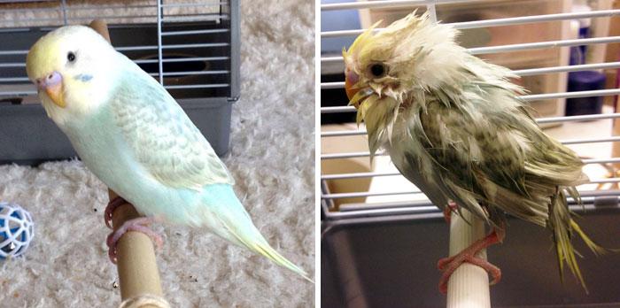 fotos-mascotas-antes-despues-bano (24)