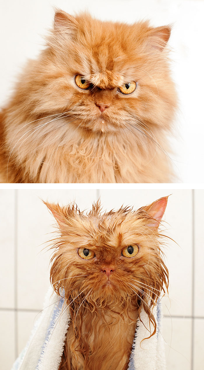 fotos-mascotas-antes-despues-bano (9)