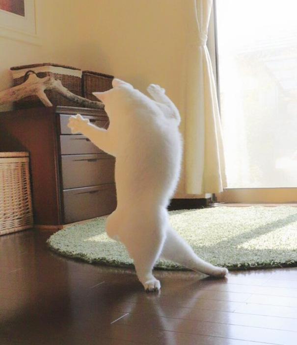 gato-bailarin-japon (1)