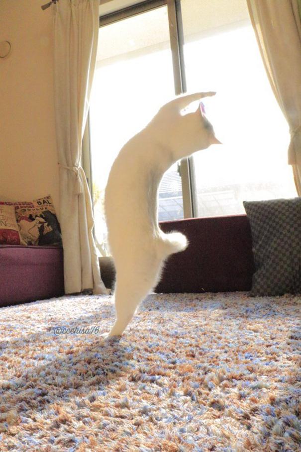 gato-bailarin-japon (5)