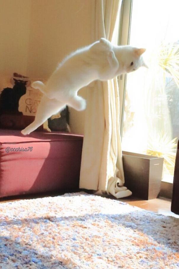 gato-bailarin-japon (6)