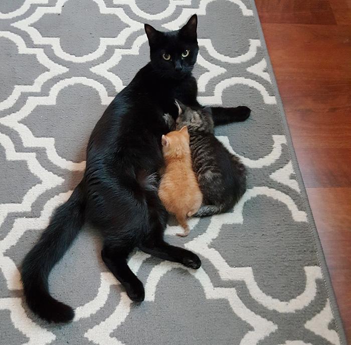 gato-squirt-rescatado-policia-donutoperator (3)